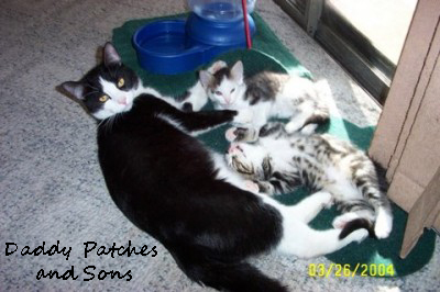 flint-river-ranch-cats-daddy-patches