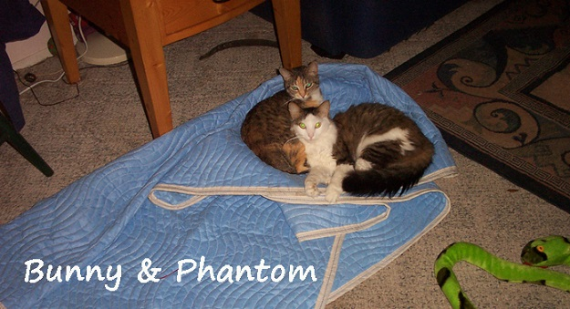 Healthy Food For Pets Customers: Bunny and Phantom, cats belonging to Kate and Jim.  They are fed the Life's Abundance Instinctive Choice Canned Cat Food and Grain Free All Life Stages Cat Food.
