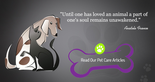 Healthy Food For Pets: Read our pet care articles.  Learn how to enhance the health and quality of life of your dogs and cats.